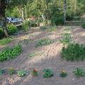 2008 07 05 Mes annuelles et une partie de mes fleurs vivace