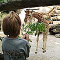 Keeper For A Day au <b>Zoo</b> de la Flèche