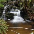 2009 04 20 Un petit ruisseau à côté du Lignon vers Mars en Ardèche en bordure de la Haute-Loire (20)
