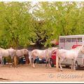 Les foires aux chevaux