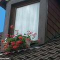 Les fleurs aux balcons en ville et la législation...