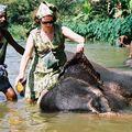 Kandy - éléphant river side
