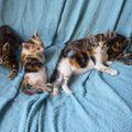 2009 09 08 Quatres petits chatons