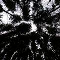 2009 10 07 Arbre vu en direction du ciel, luminosité réglée au minimal