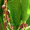 BijouxBidouilles
