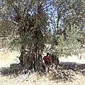 Défi 52 - 2015: arbre