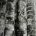 Abbaye du Relec. Bretagne. copyright: al.sizun