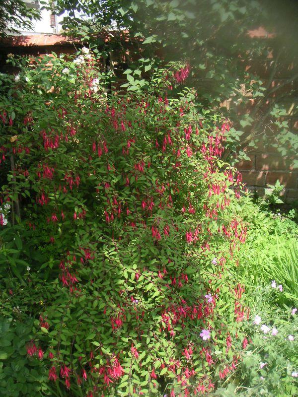 jardin) (2)
