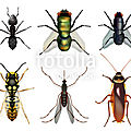 Une étude met en lumière le déclin <b>catastrophique</b> des insectes