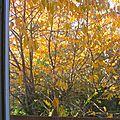 Ce matin grand beau temps d'automne -pour l'instant t -