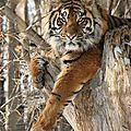 tigre projet pour la france