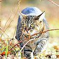 chats projet pour la france1