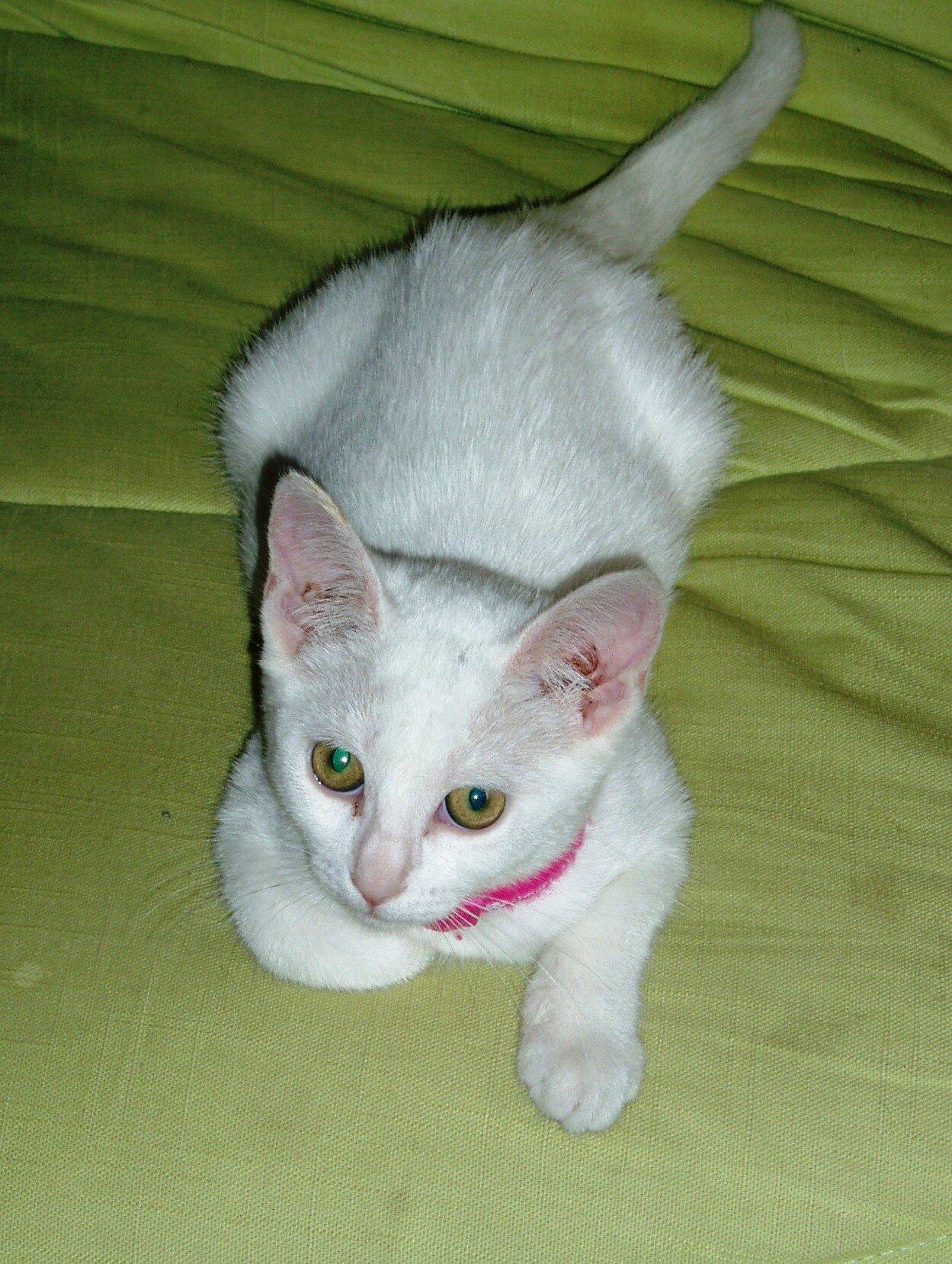 Fille à chats