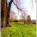 Le printemps est vraiment là...