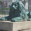 Lions de gerland