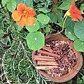 Sii colopathie candidas albicans. des traitements naturels qui soulagent mieux que les médicaments