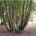 Troncs d'arbre qui se donnent au ciel !