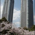 292-Shiodome-Sakura