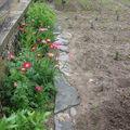 2008 06 16 Les vivaces de mon jardin le long du mure