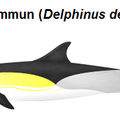 Mer Méditerranée la surconsommation et la pêche excessive font mourir les dauphins a une allure folle, ça fou les boules