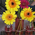 Fushia et jaune - couleur pop