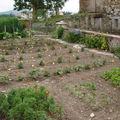 2008 07 13 Une partie de mon jardin (Mes tournesolsa gauche)