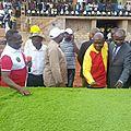 La pelouse du stade bonzola est bien arrivée à mbuji-mayi et a été présentée à la population