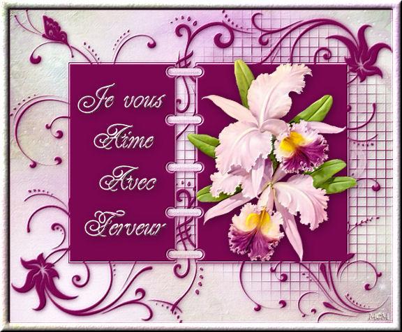 orchidee langage des fleurs