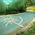 pétales de fleurs d'acacia sur la route yurtao