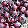 oignons rouges www.passionpotager.canalblog.com