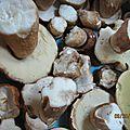 Enfin des champignons...