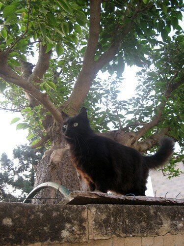 Provence chat 6