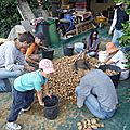 Recolte de pomme de terre: en collectif