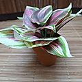 mini tradescantia artificiel