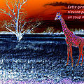 girafe Itak (2)