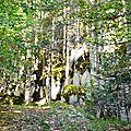 Escapade en forêt d'Aspe et Barétous, le 29 juillet 2017