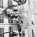 Paris par