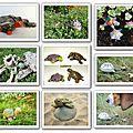 Des tortues de toutes les couleurs