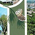 Nîmes_tour magne_detail