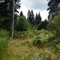 Sortie en forêt 45.
