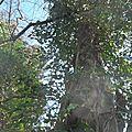 Sortie en forêt 41