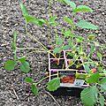 c-plants avec fleurs et fruits à supprimer