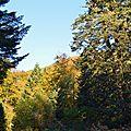 La forêt d'Issaux enlace le col de Labays...