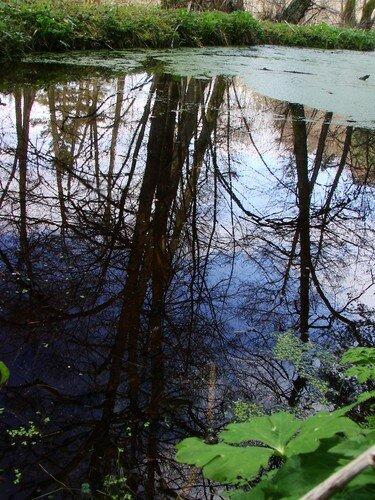 2008 04 23 Les reflets d'un arbre dans l'eau