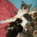 2008 04 11 Papillon avec deux de ses chatons qui tètent