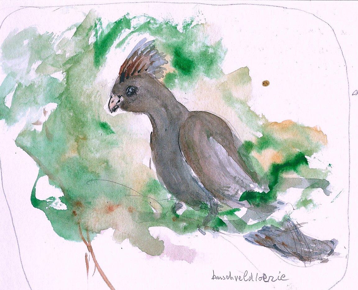oiseaux Bushveld lorie
