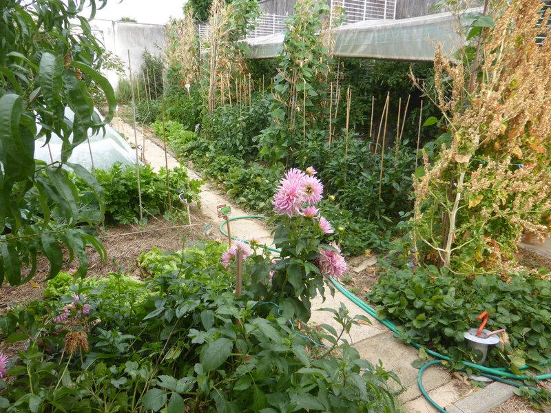 28-potager abri tomates (4)