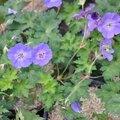 St jean de beauregard un jardin merveilleux