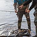 Pêcheurs de carpes