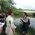 Récoltes sauvages en bord de claise tourangelle